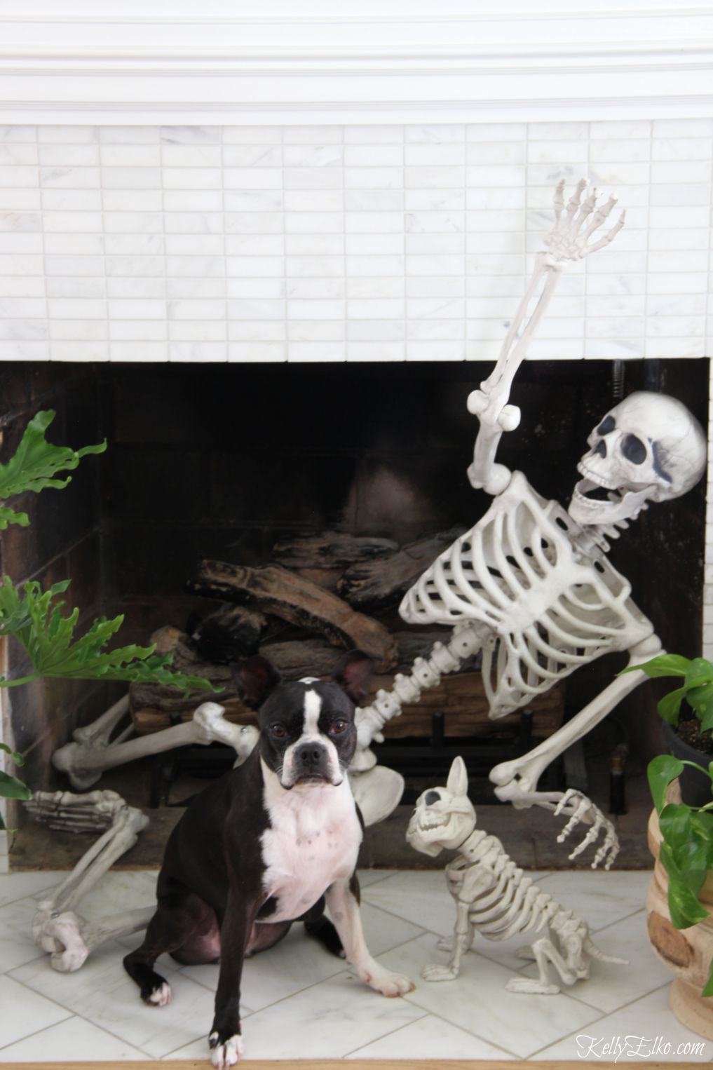 Love this Halloween mantel with life size skeleton and his dog in the fireplace! kellyelko.com #halloween #halloweendecor #halloweendecorations #skeleton #halloweenideas #diyhalloween #halloweenhouse