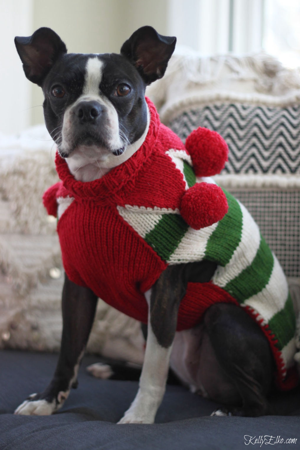 Dogs in Sweaters! Love this elf sweater with big red pom poms on this Boston Terrier kellyelko.com #petclothes #dogclothes #dogsweater #bostonterrier #kellyelko