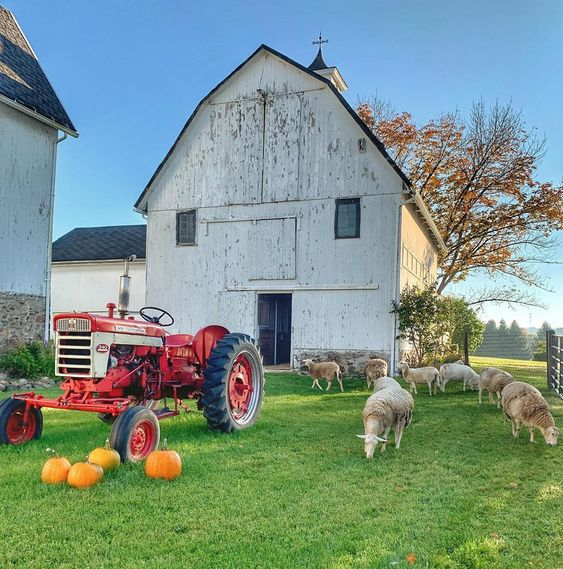Beautiful old barn with red tractor and grazing sheep kellyelko.com #barn #farm #farmhouse #sheep #tractor #farmhousestyle #farmhousedecor
