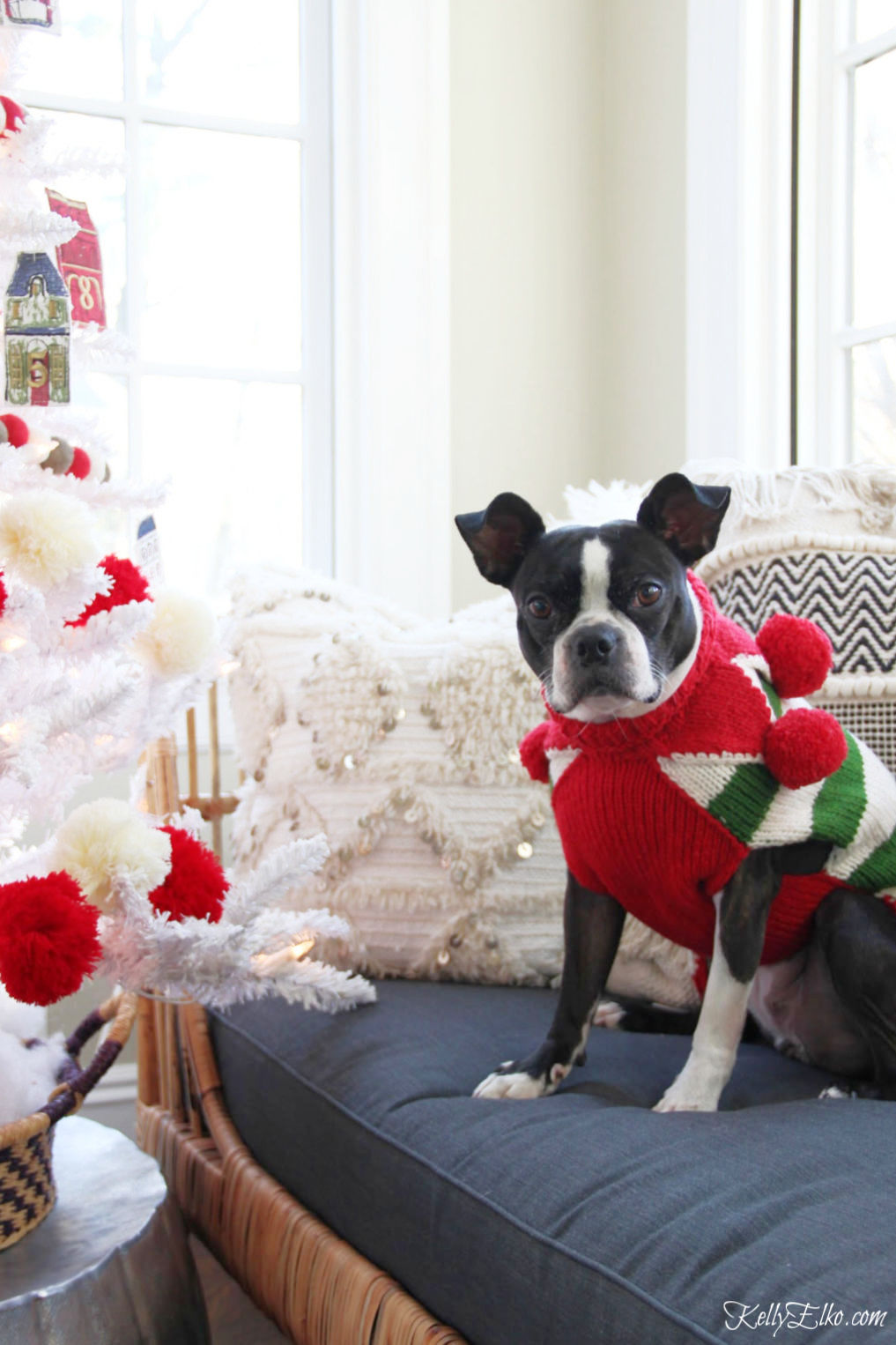 Creative Christmas Tour - how adorable is her Boston Terrier dressed in a red and green pom pom sweater kellyelko.com #christmas #christmasdecor #christmasdecorating #christmashome #christmastour #diychristmas #christmasideas #christmasmantel #christmastree #christmasornaments #vintagechristmas #farmhousechristmas #colorfulchristmas #creativechristmas #kellyelko #bostonterrier #pompoms #cutedogs #frenchbulldog #dogclothes