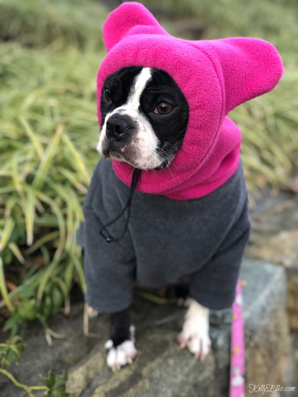 The perfect hoodie dog coat for cold winter days kellyelko.com #bostonterrier #frenchbulldog #dogclothes #dogsweater #kellyelko #snorf