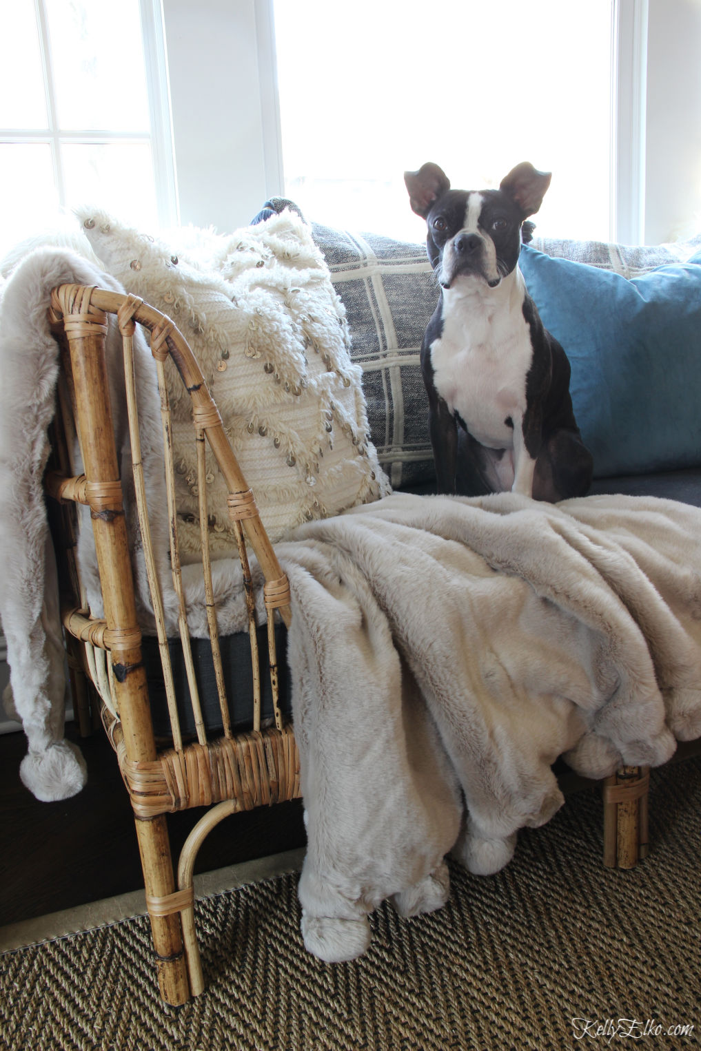Love this cozy rattan daybed with pom pom throw and cute Boston Terrier kellyelko.com #rattanfurniture #daybed #cozydecor #bluedecor #serenaandlily #ourarticle #pompom #bostonterrier #kellyelko