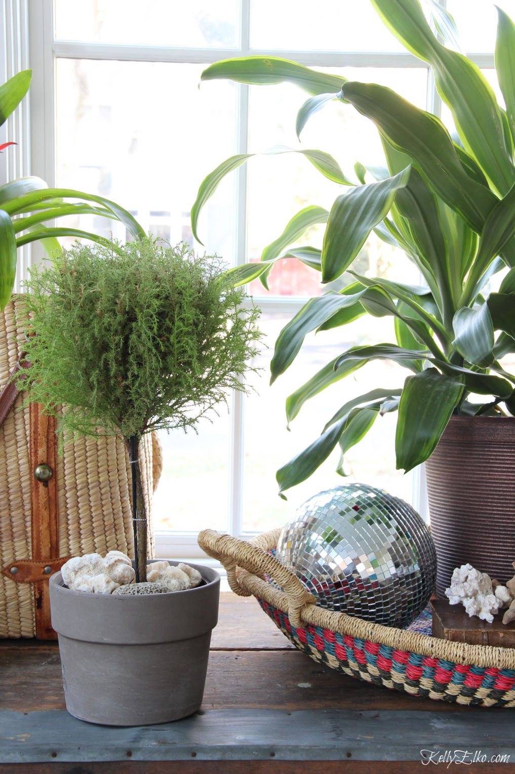 Beautiful houseplant display including a lemon cypress kellyelko.com #plants #houseplants #sunroom #jungalow #jungalowstyle #bohostyle #bohodecor #interiordesign #planters #vintagedecor #plantlady #eclecticdecor #kellyelko #lemoncypress #topiary #discoball