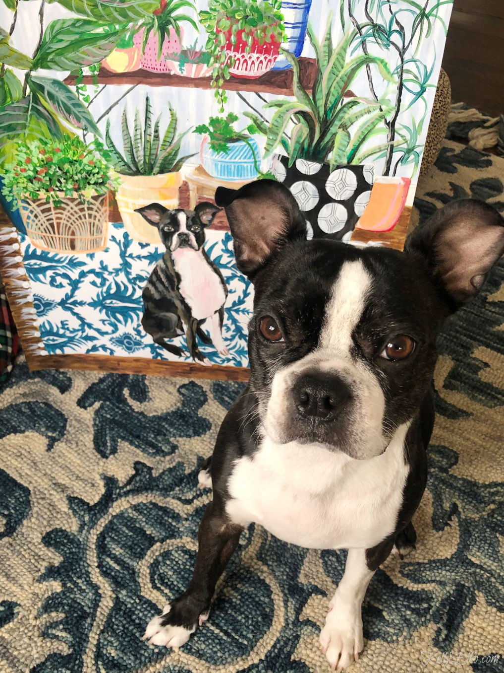 How fun is this custom pet portrait! I love the colorful plants and pattern and of course the Boston Terrier! kellyelko.com #petportrait #customart #originalart #artist #bostonterrier #colorlovers #plantlady