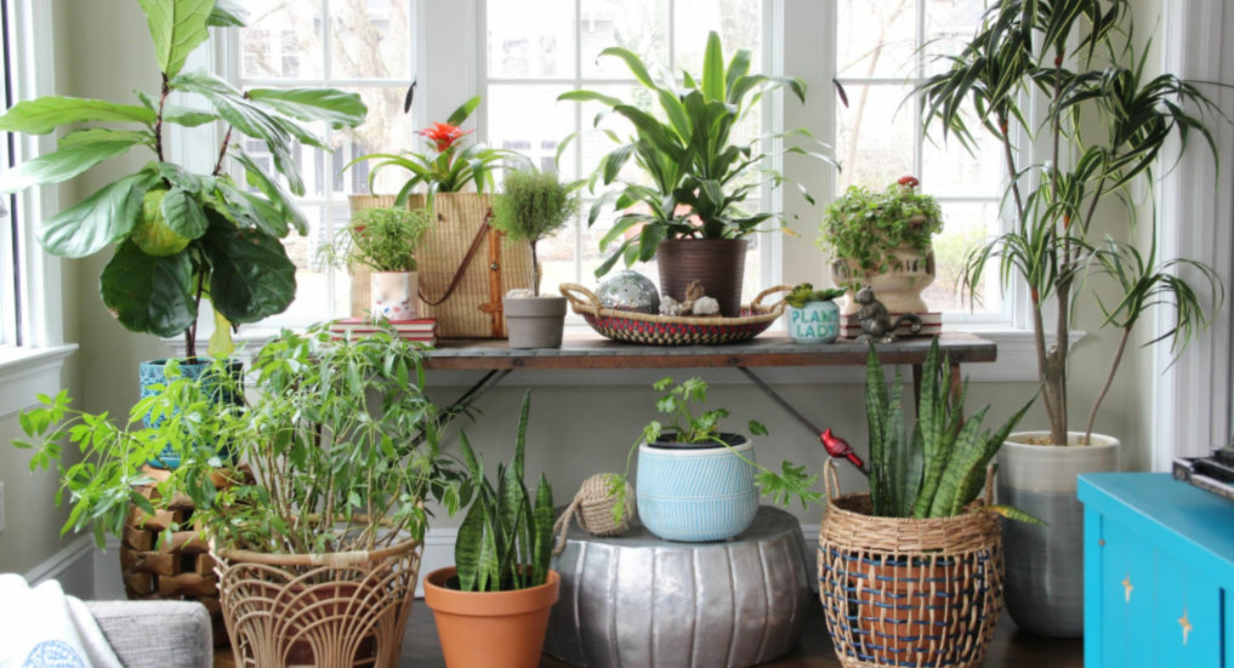 plant-display-sunroom-jungalow-boho-plant-lady