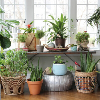 Crazy Plant Lady Sunroom kellyelko.com #plants #houseplants #plantlady #bohodecor #vintagedecor #sunroomdecor #kellyelko