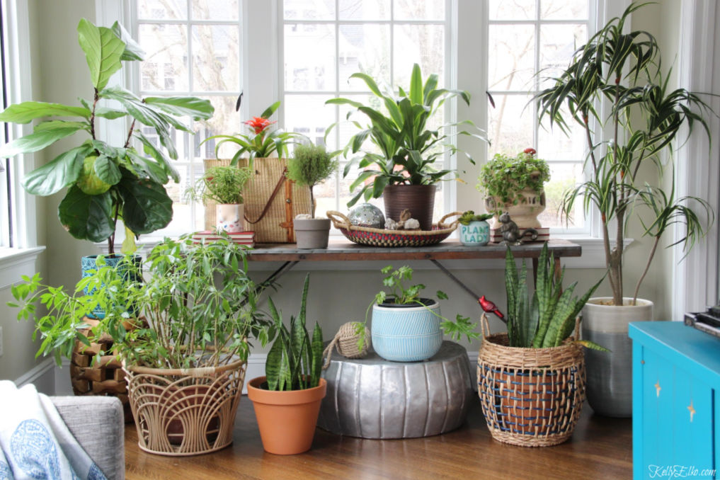 Love this houseplant display in this light and bright sunroom kellyelko.com #plants #houseplants #sunroom #jungalow #jungalowstyle #bohostyle #bohodecor #interiordesign #planters #vintagedecor #plantlady #eclecticdecor #kellyelko