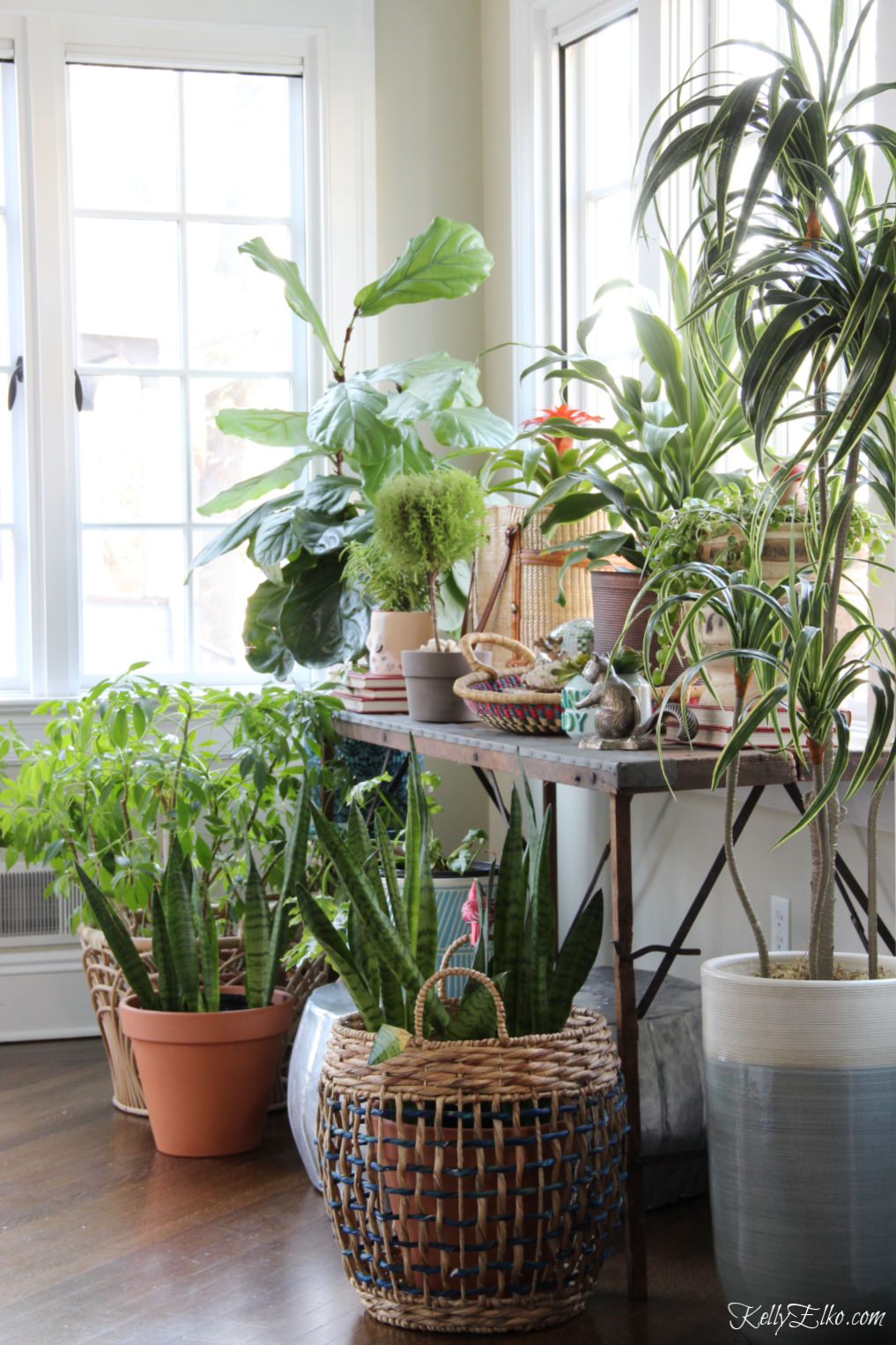 Beautiful sunroom filled with a variety of sun loving plants kellyelko.com #plants #houseplants #sunroom #jungalow #jungalowstyle #bohostyle #bohodecor #interiordesign #planters #vintagedecor #plantlady #eclecticdecor #kellyelko