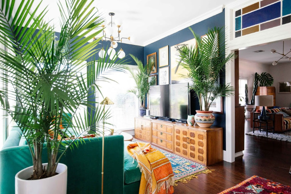 Palm trees add such drama indoors #palmtree #plantlady #houseplants #palms #bohodecor #eclecticdecor