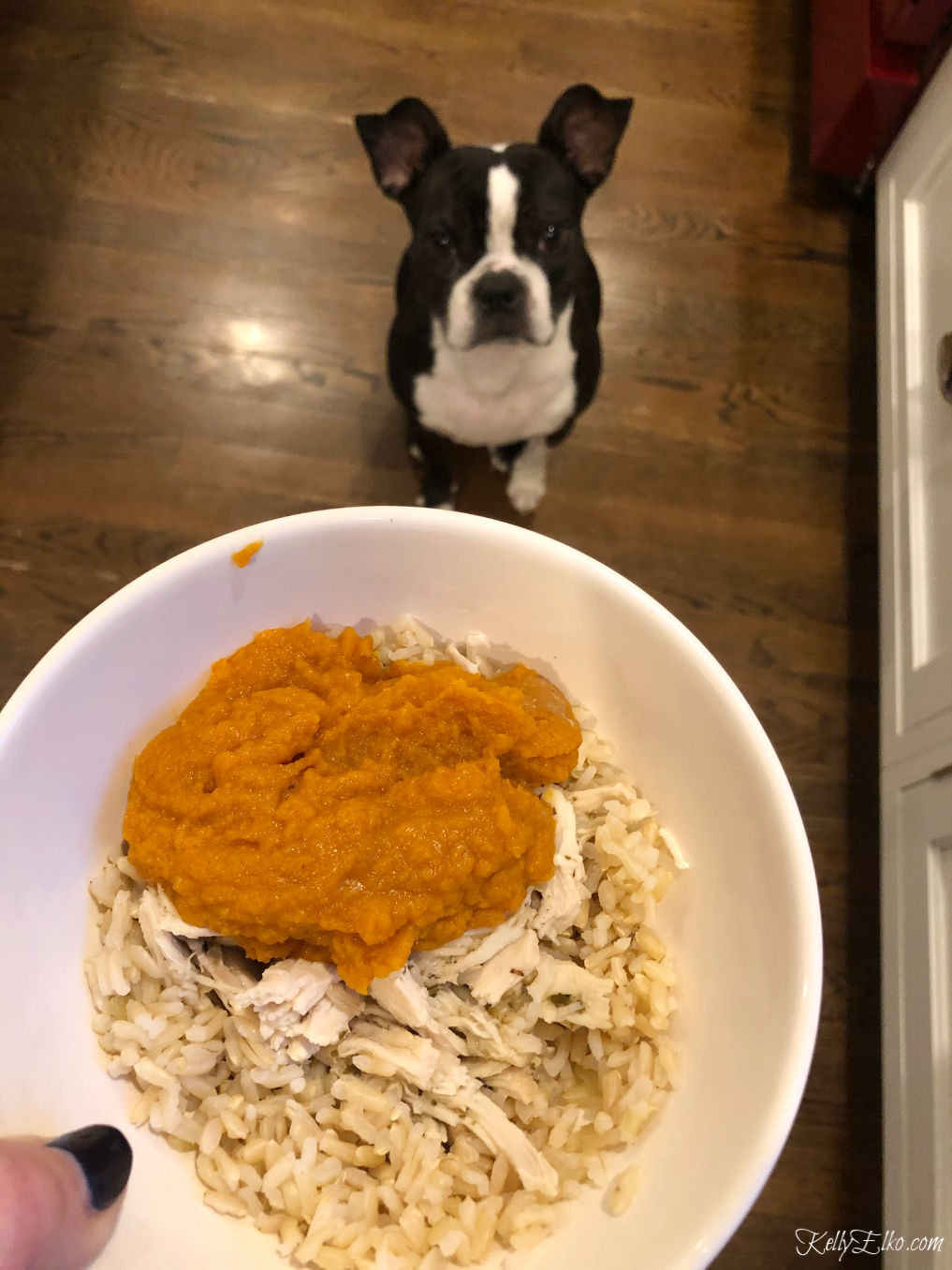 Pumpkin puree has lots of fiber for your dog kellyelko.com #dogs #dogfood #bostonterrier