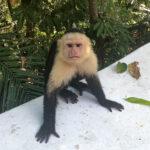 Costa Rica villa rental Manual Antonio kellyelko.com #costarica #vacation #travel #monkey #travelblog #travelblogger #manualantonio #villa #beachvacation