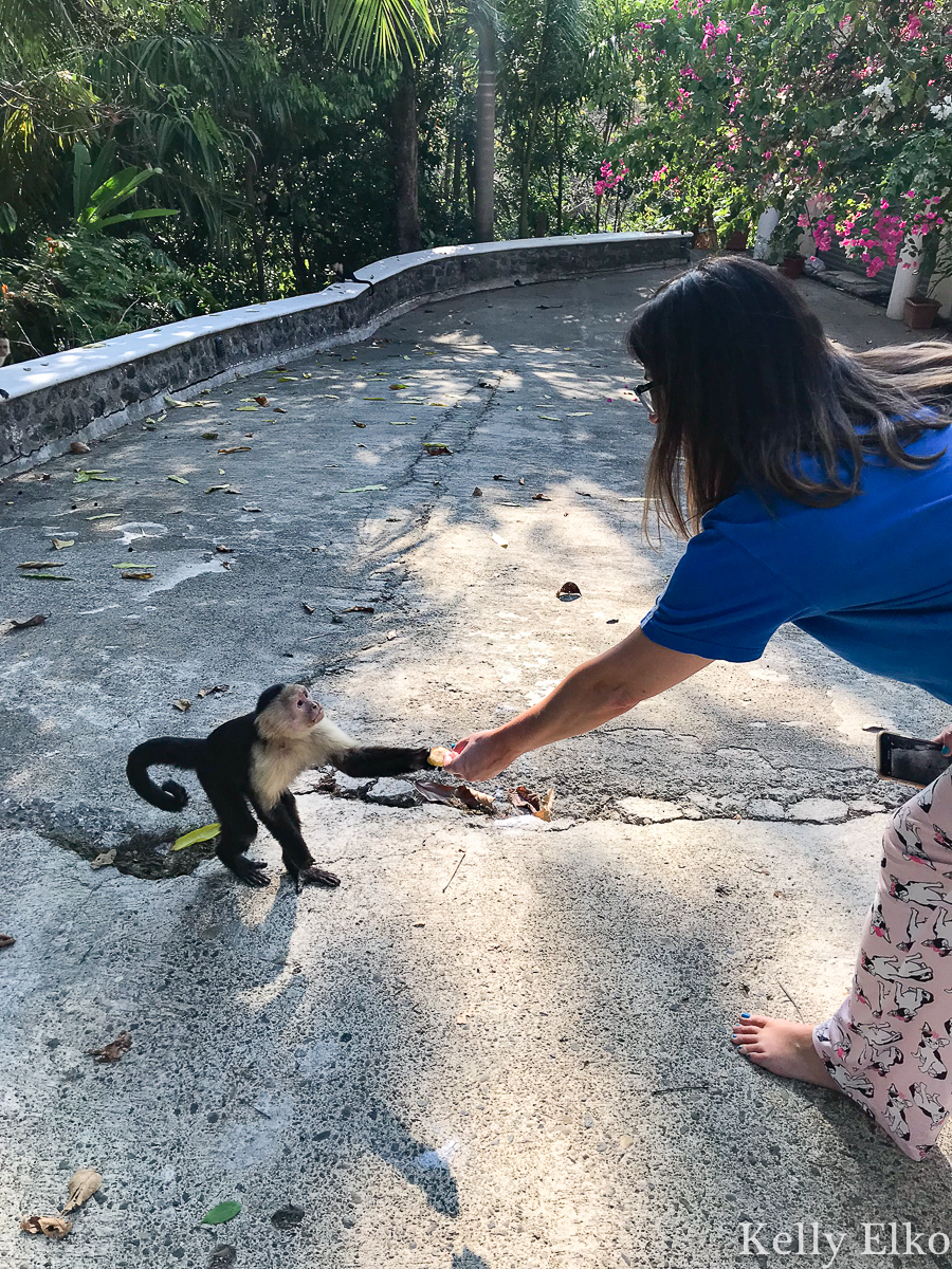 Feed monkeys on the property of this villa in Costa Rica! kellyelko.com #monkeys #costarica #vacation #capucianmonkey #whitefacedmonkey #travel #travelblog #travelblogger