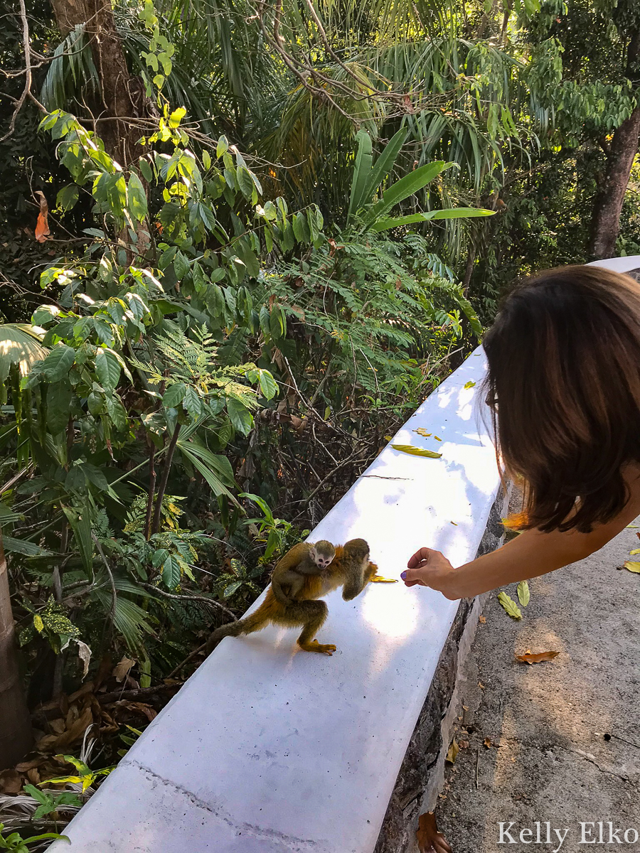 Feed monkeys on the property of this villa in Costa Rica! kellyelko.com #monkeys #costarica #vacation #spidermonkey #travel #travelblog #travelblogger