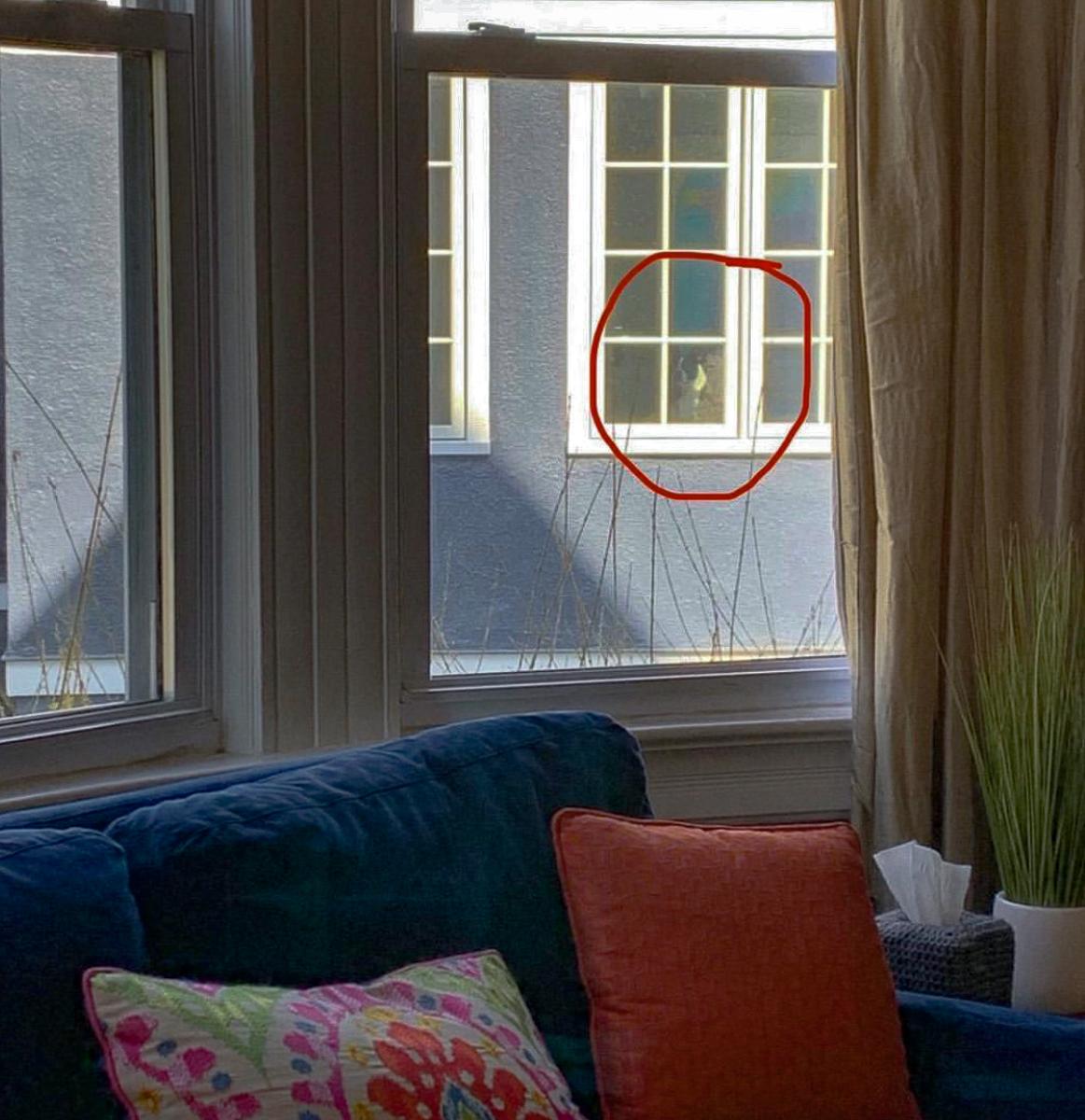 Peeping Tom Dog! kellyelko.com #funnydog