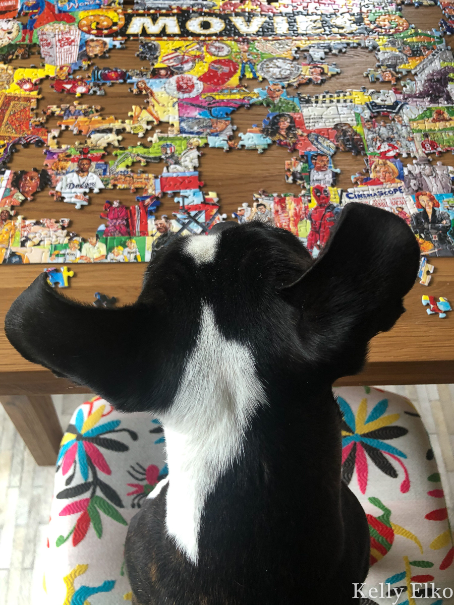 Puzzles are the perfect solution to combat boredom kellyelko.com #puzzles #bostonterrier #games
