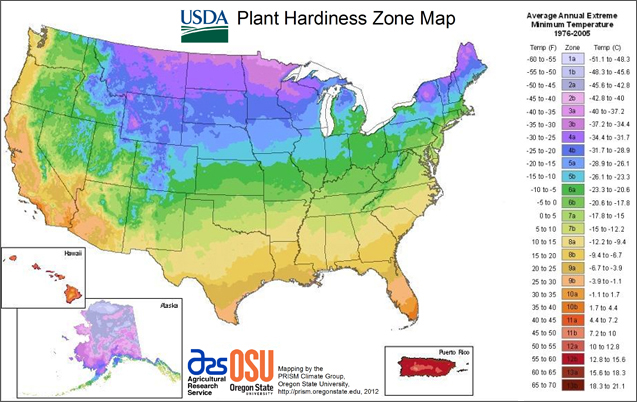 Check this plant hardiness zone map to make sure your plants thrive in your location