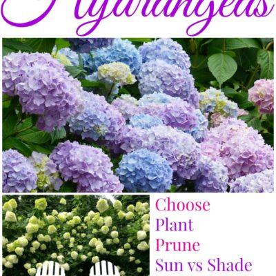 Hydrangeas 101 - the complete guide! kellyelko.com #hydrangeas #perennials #gardening #gardeningtips #gardener #flowers #plants #kellyelko
