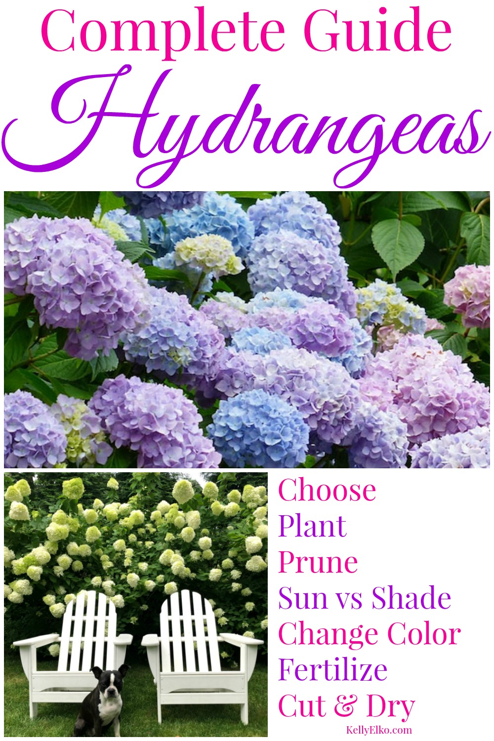 Hydrangeas 101 - the Complete Guide to Growing Beautiful Blooms kellyelko.com #hydrangeas #perennials #hydrangea #gardeners #gardening #gardeningtips #garden