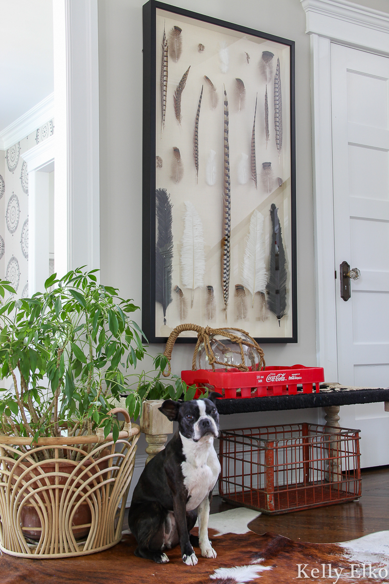 Love this entrance with woven bench, vintage crates, feather shadowbox art and big plant kellyelko.com #foyer #foyerdecor #entry #entrydecor #farmhousedecor #eclecticdecor #bohodecor #vintagedecor #shadowbox #art #plants #houseplants #coke #bostonterrier
