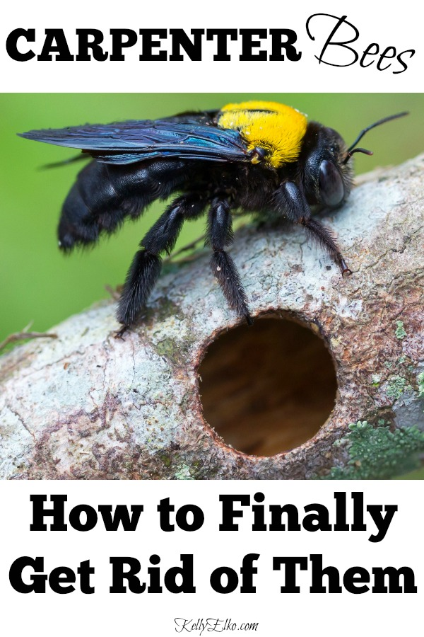 How to Get Rid of Carpenter Bees for Good! kellyelko.com #bees #pestcontrol #carpenterbees #housemaintenance #bees #garden #nature