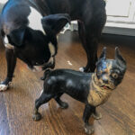 Tips on how to spot an antique cast iron doorstops from reproductions kellyelko.com #antique #antiques #collections #collectibles #bostonterrier #antiquedecor