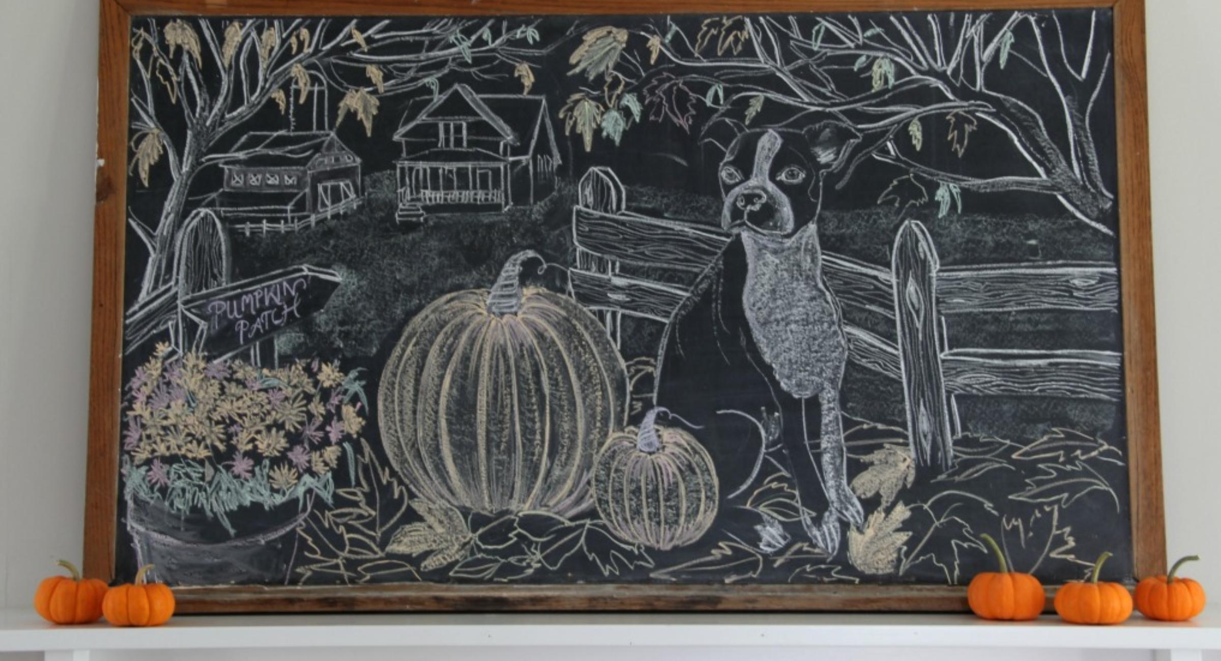 giant-fall-chalkboard-art-boston-terrier