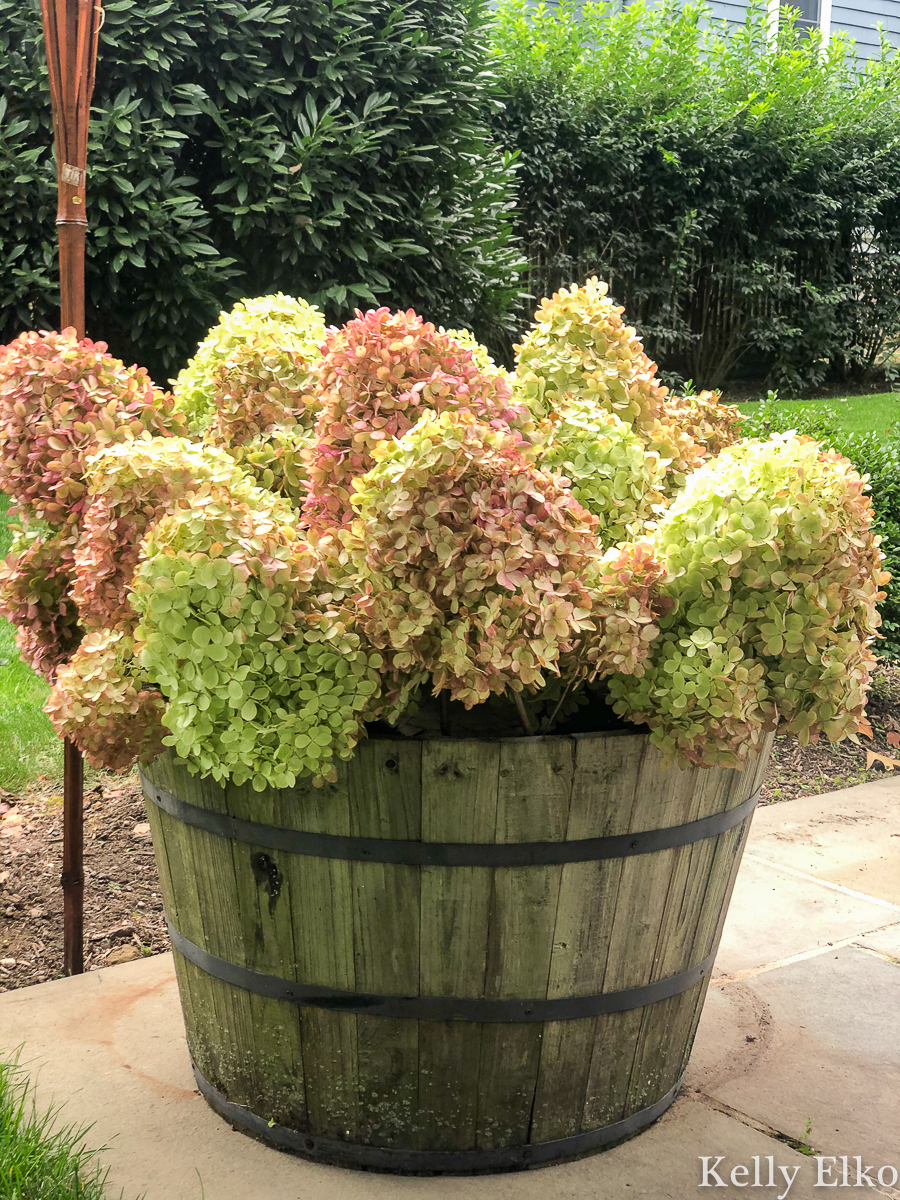I love this huge planter filled with dried hydrangeas kellyelko.com #hydrangeas #gardening #gardens #planters #limelight #limelighthydrangeas #gardeners #patio #farmhousedecor