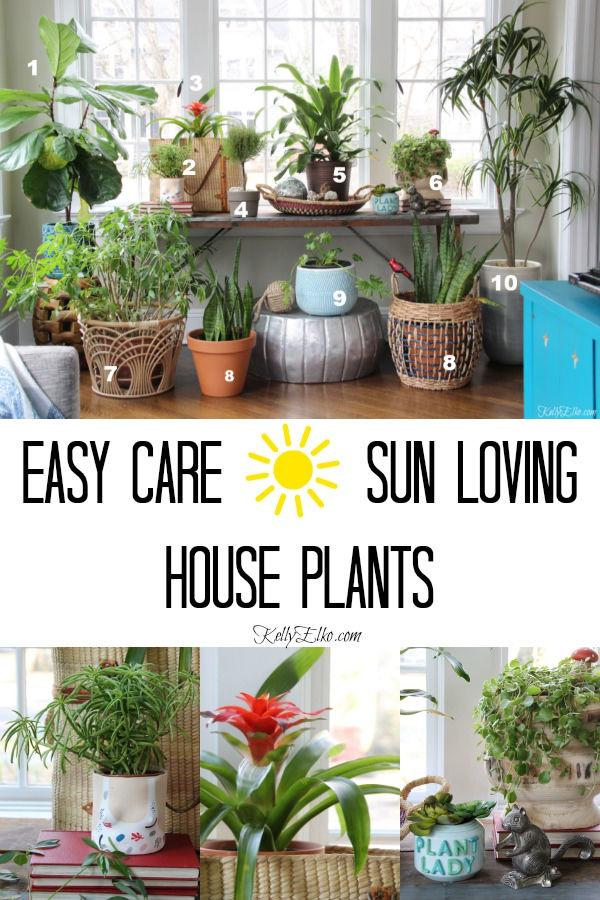 Favorite sun loving houseplants and tips for growing and caring for plants kellyelko.com #plants #houseplants #sunroomdecor #plantlady #gardening #gardeners #gardens #fiddleleaffig #succulents #palmtrees #snakeplant