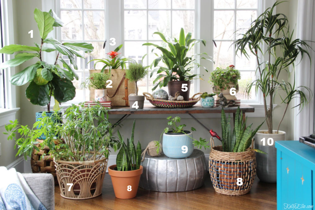 Favorite easy care houseplants - I love this sunroom space dedicated to a beautiful assortment of plants kellyelko.com #plants #planters #sunroomdecor #jungalow #gardens #gardener #plantcare #tipsandtricks