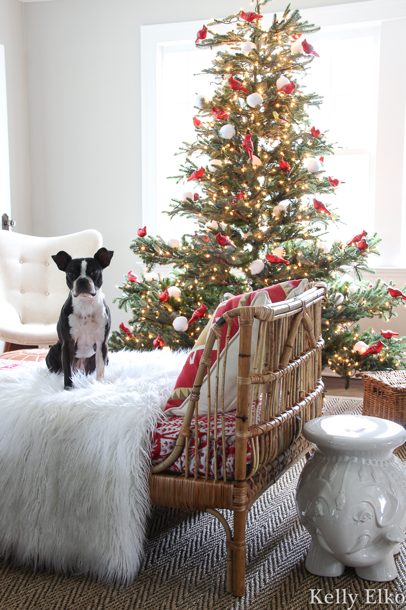 WOW love this realistic looking sparse Christmas tree filled with red carinal ornaments and the Boston Terrier is cute too! kellyelko.com #sparsechristmastree #realisticchristmastree #farmhousechristmas #vintagechristmas #christmastree #christmasornaments #rattanfurniture #daybed #bostonterrier #cozychristmas #farmhousechristmas