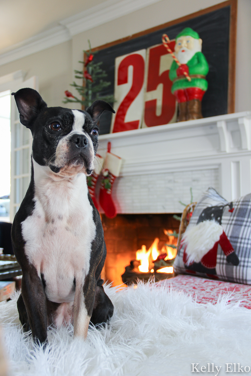 It's a Boston Terrier Christmas home tour! kellyelko.com #bostonterrier #christmashometour #vintagechristmas #retrochristmas #christmasmantel #farmhousechristmas #christmasblowmold #colorfulchristmas