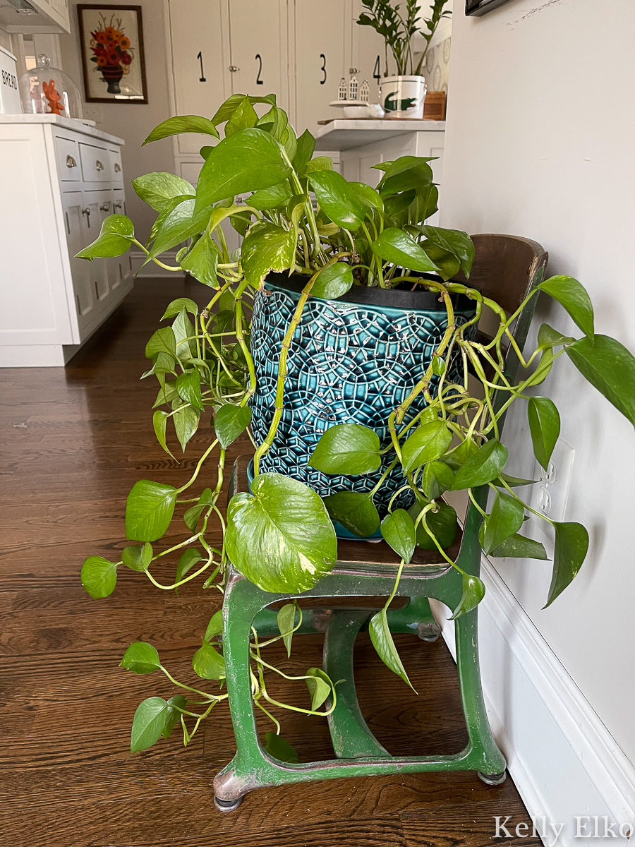How cute is this vintage chair turned plant stand kellyelko.com