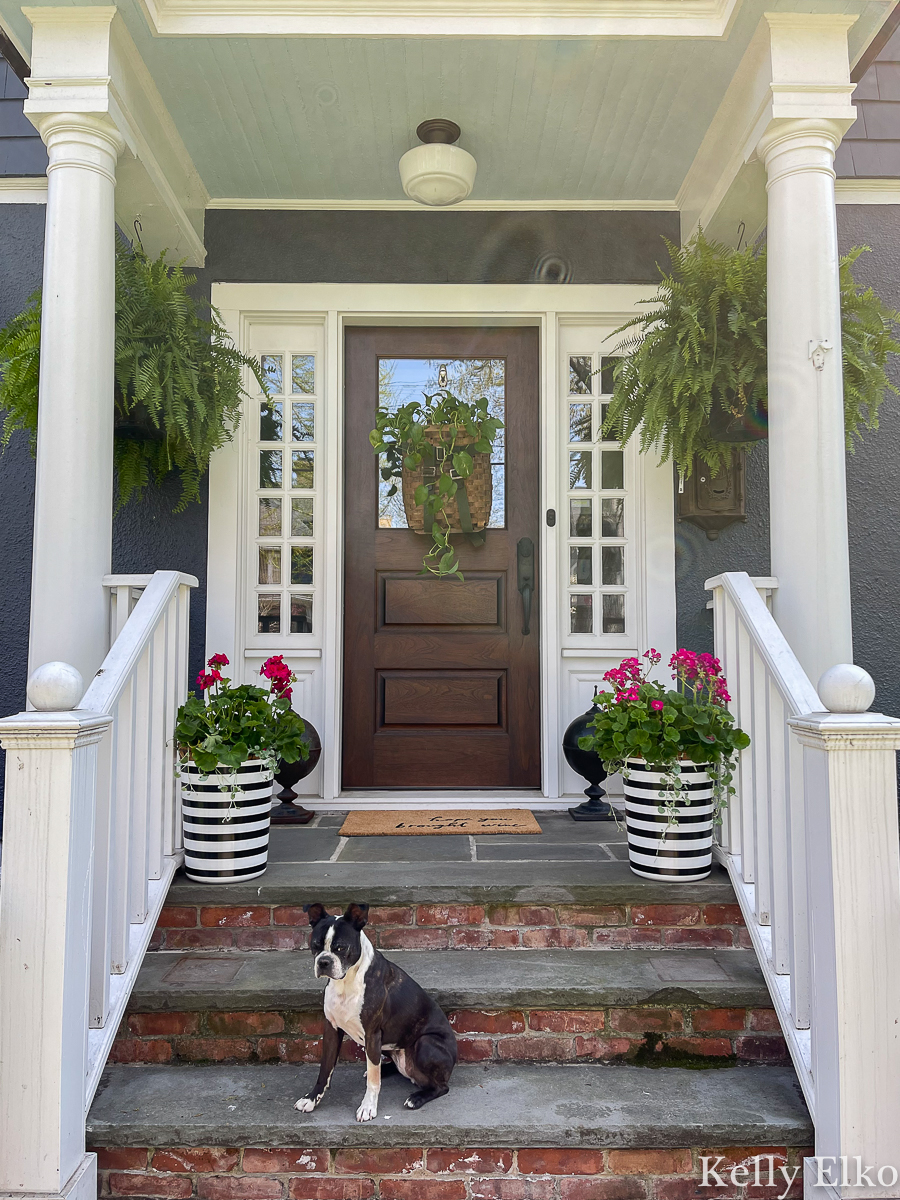 Love this front porch with trash can planter, huge hanging ferns and basket wreath kellyelko.com #porch #ferns #planters #summerporch #geraniums