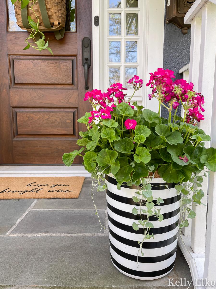 Love this black and white planter with pink geraniums kellyelko.com #planter #geraniums #porchdecor
