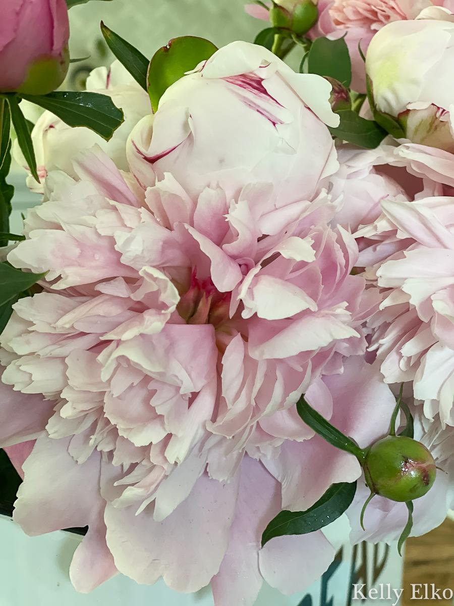 Gorgeous double peony bloom kellyelko.com