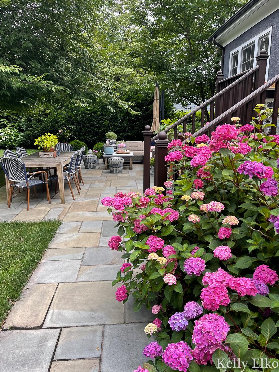 Summer Patio Tour - this stunning bluestone patio is overflowing with beautiful hydrangeas kellyelko.com