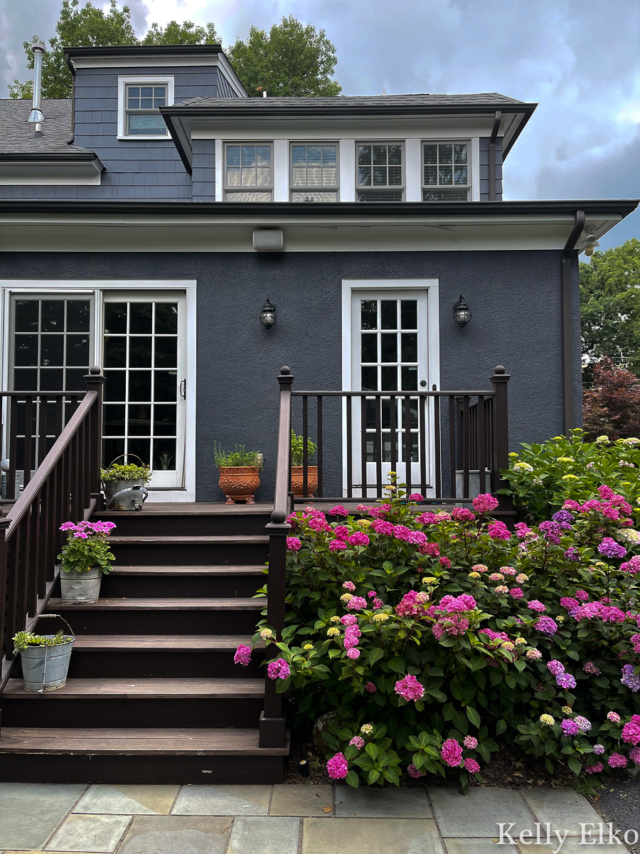 Love this blue home with stunning hydrangeas surrounding the back deck kellyelko.com