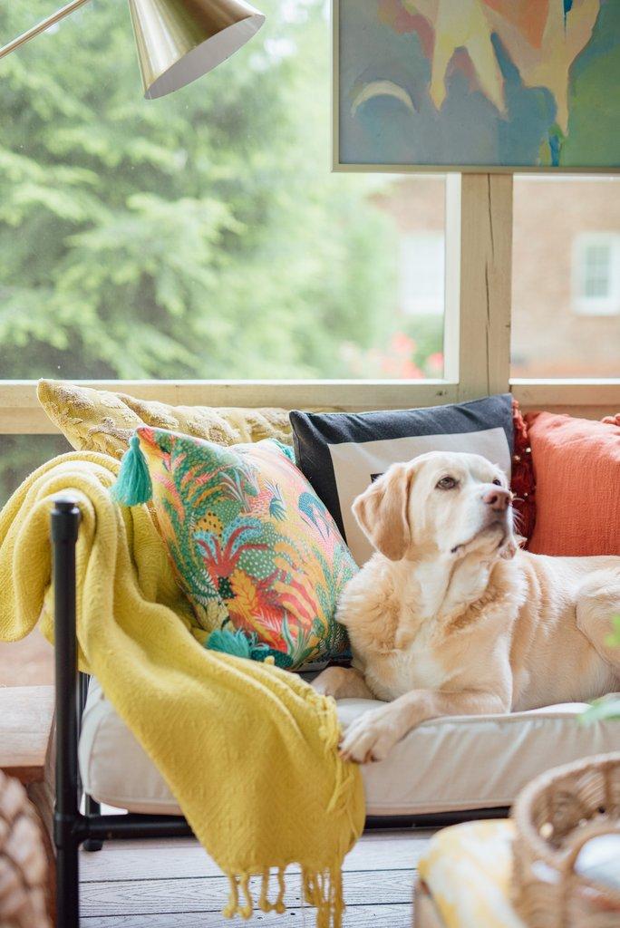 Adorable dog lounging kellyelko.com